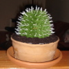 CAKE.Cactus.jpg